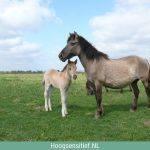 Verbinding maken met een paard